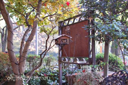 横浜と石神井公園♪18