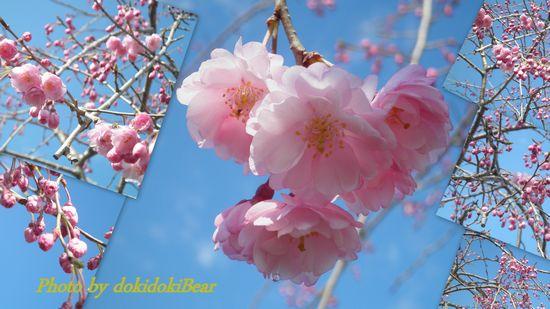 桜字入り-1