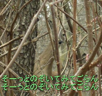 by0330107.jpg
