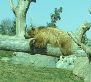 zoo03241010.jpg