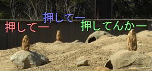 zoo03241025.jpg