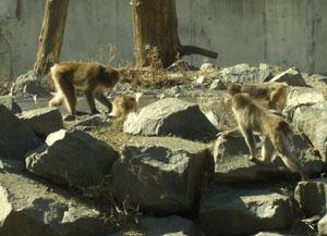 zoo0324108.jpg