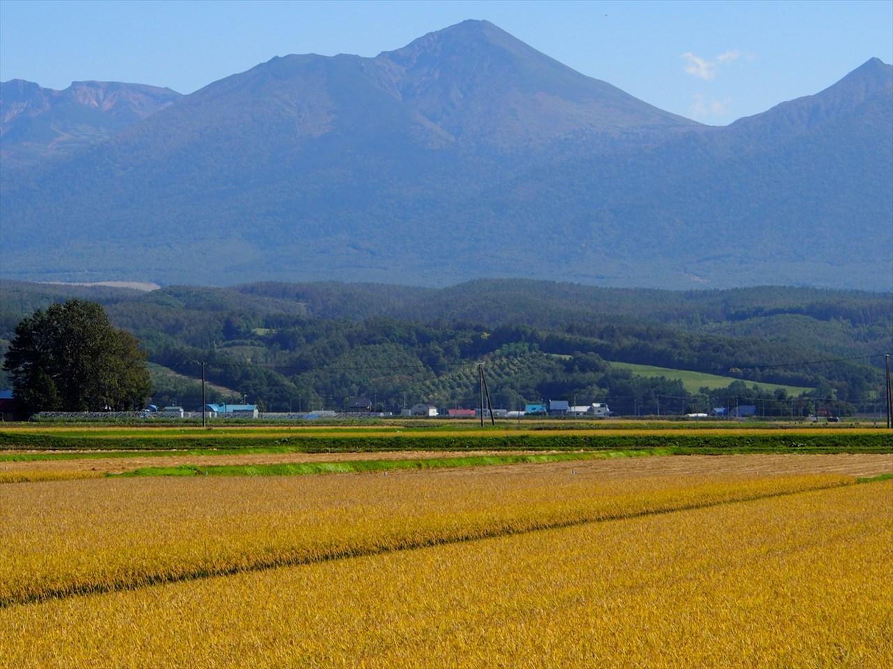 秋の実りとその向こうにそびえ立つ山