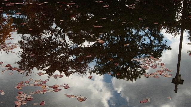 落ち葉の浮かぶ水面はまるで鏡のよう