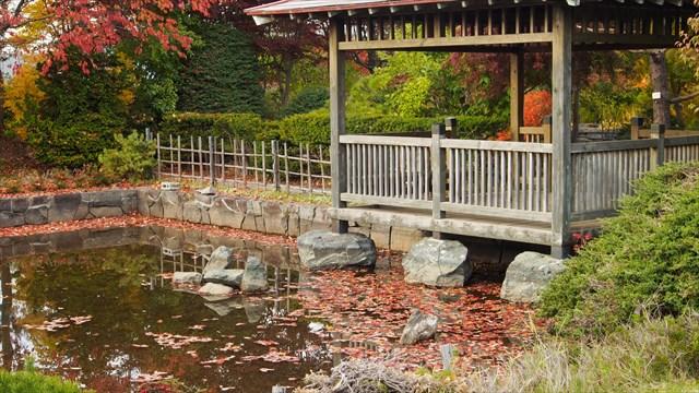 日本庭園の池に浮かぶ落ち葉たち