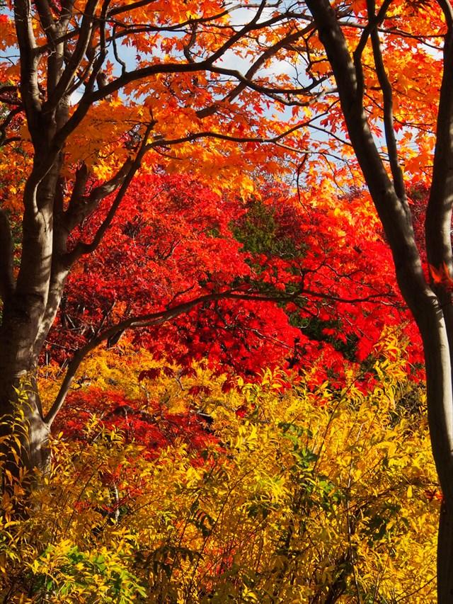 モミジだけでなく、地面から生える草も秋の色に