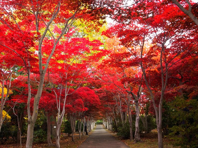 平岡樹芸センターの散歩道を彩る紅葉達