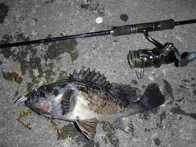 夜釣り30UP