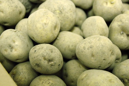 北海道産の芋