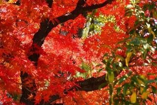 小学校の紅葉