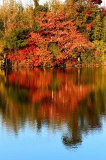 柱大池の紅葉と鷺