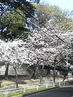 100402-03yamasaka2.jpg