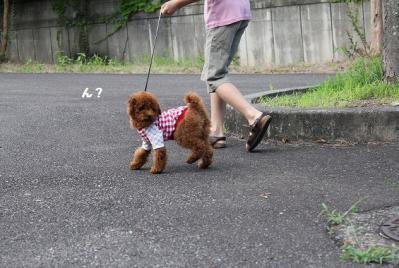 2011 7 お散歩