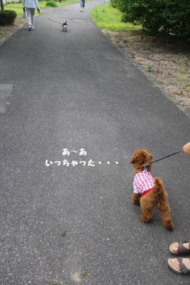 2011 7 散歩