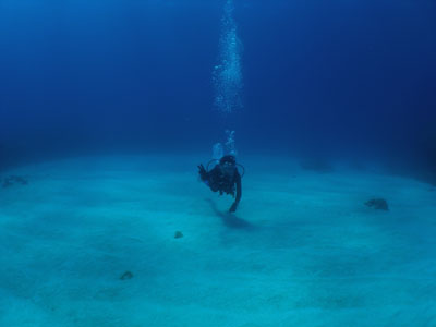 半日午前ダイビング