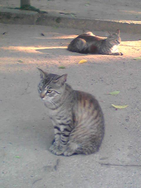 Image879姫路城の猫