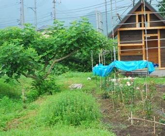 小屋左側畑