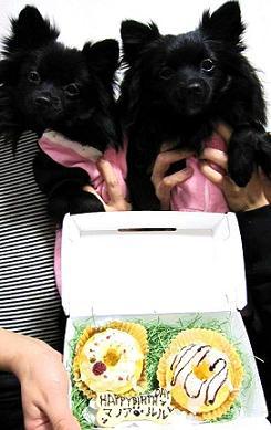 誕生日ケーキとマノア&ルル