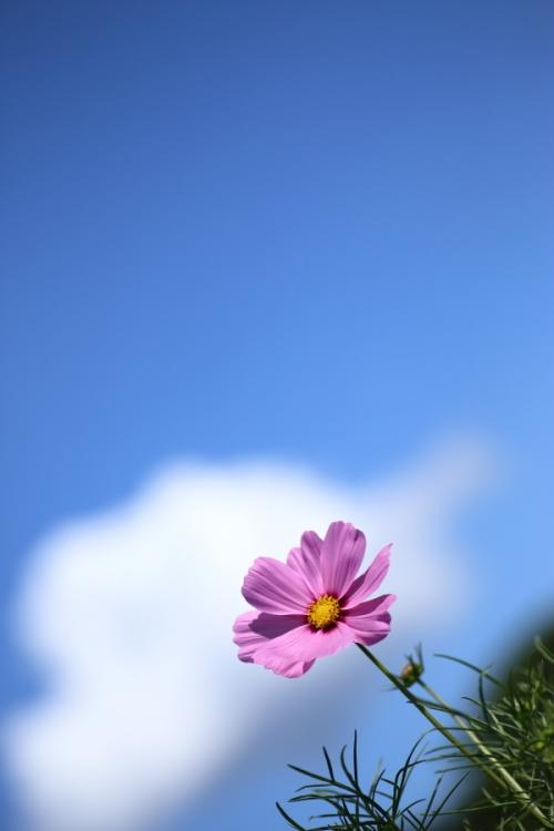 EOS6D_2014_09_14_3988.jpg