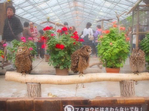 2003.3.6 花鳥園 058