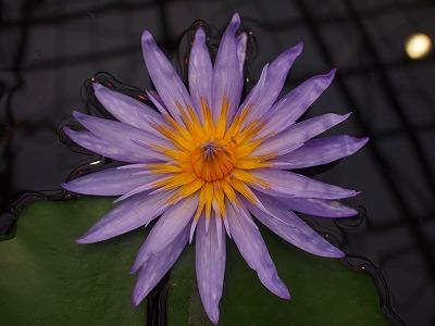 2003.3.6 花鳥園 119
