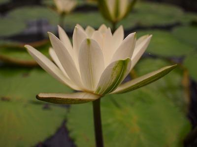 2003.3.6 花鳥園 117