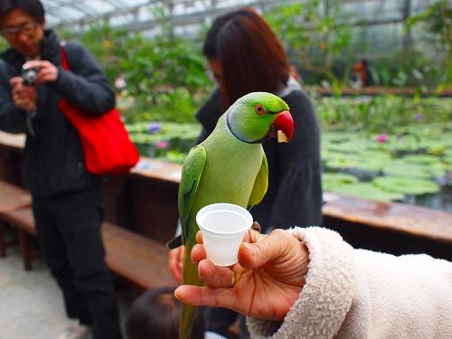 2003.3.6 花鳥園 080