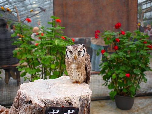 2003.3.6 花鳥園 062