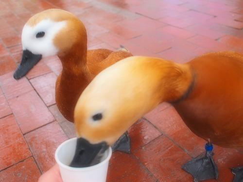 2003.3.6 花鳥園 155