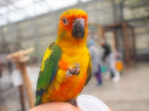 2003.3.6 花鳥園 215
