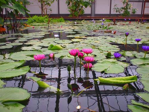 2003.3.6 花鳥園 184