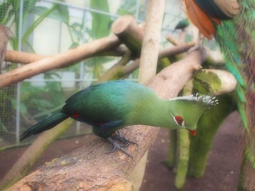 2003.3.6 花鳥園 227