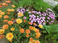 いろいろの花