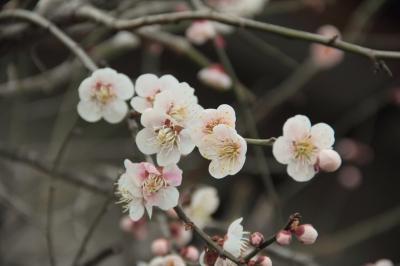 ビルシャナ 春