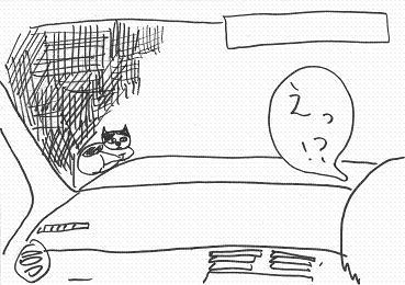 ネコ事件1