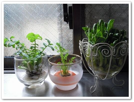 キッチン菜園