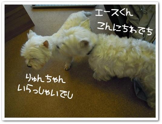 エース&りゅん