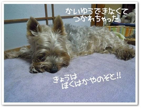 2011 Westie Party @TACHIKAWA