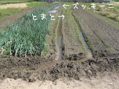 2011_05_31_02.jpg