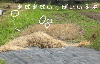 2011_06_01_02.jpg
