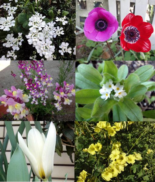 今年の花たち