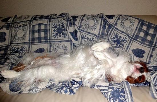 ヘソ天王子の華麗な寝姿