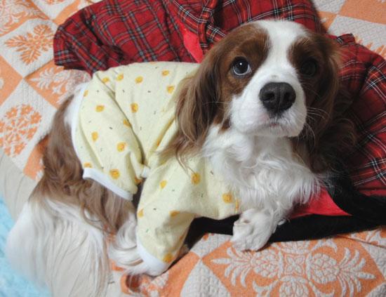 新しいパジャマでつ