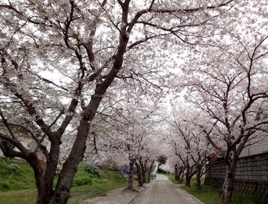 神社の花トンネル