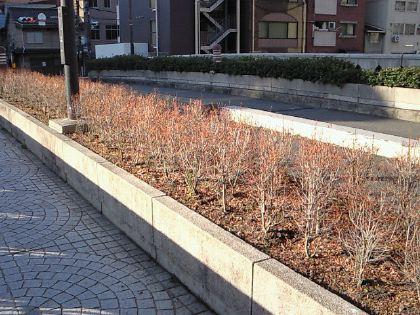 shimoyamatobashi23.jpg