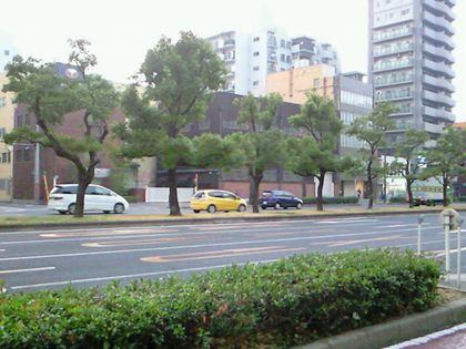 shinnaniwasuzi_0519.jpg