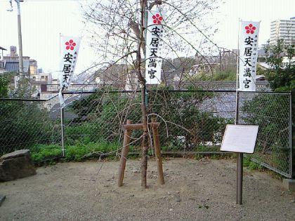 yasui09.jpg