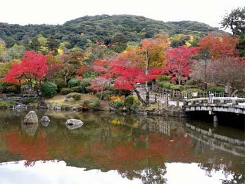 ◆ブログ・京都円山公園