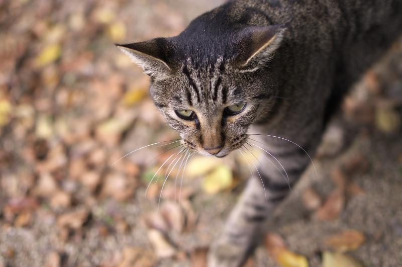 長居植物園 猫