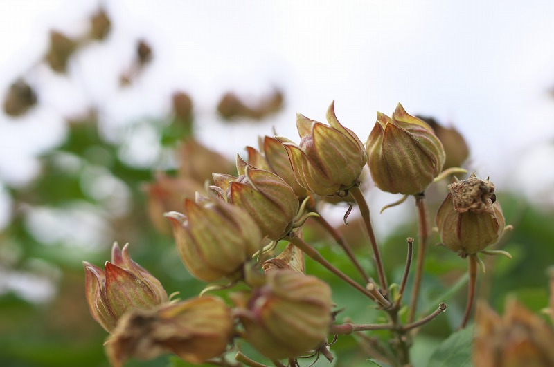 長居植物園 秋の植物